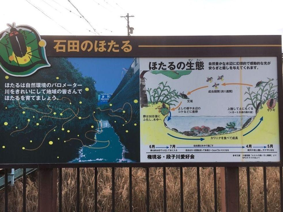 浜松市中区富塚町,蛍,石田のほたる小道