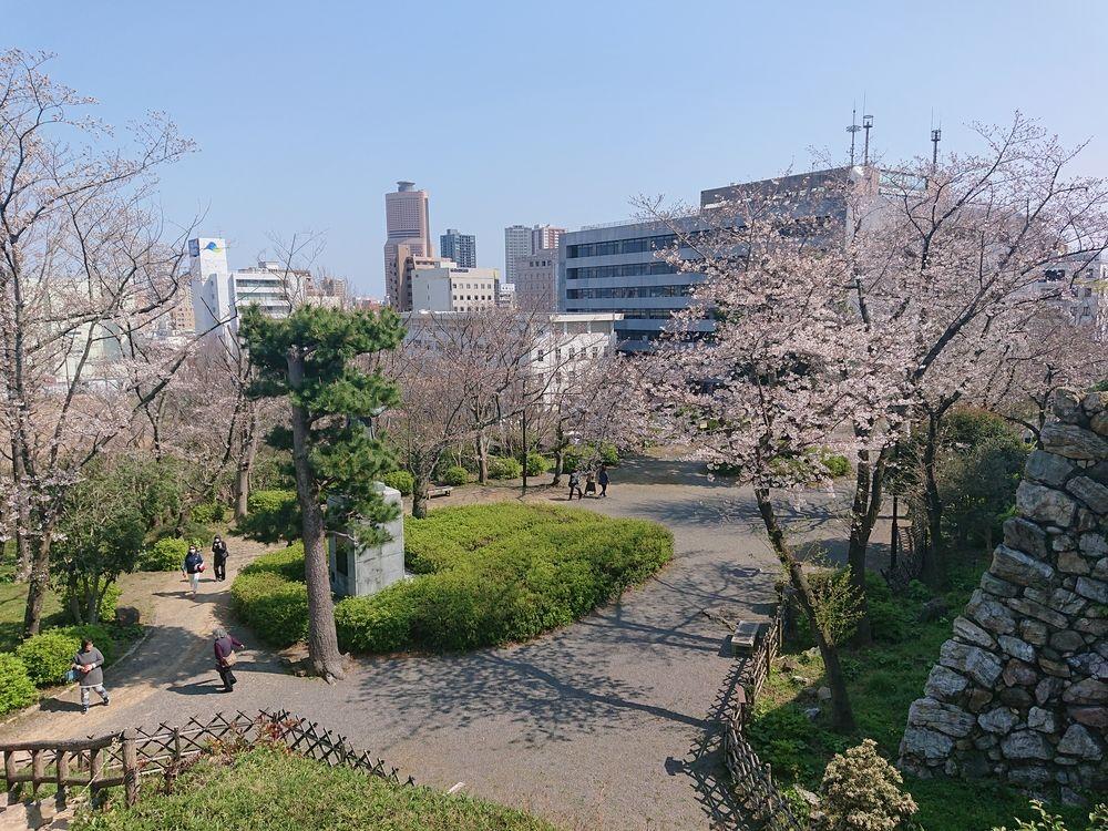 浜松城公園桜の開花状況(4月2日)